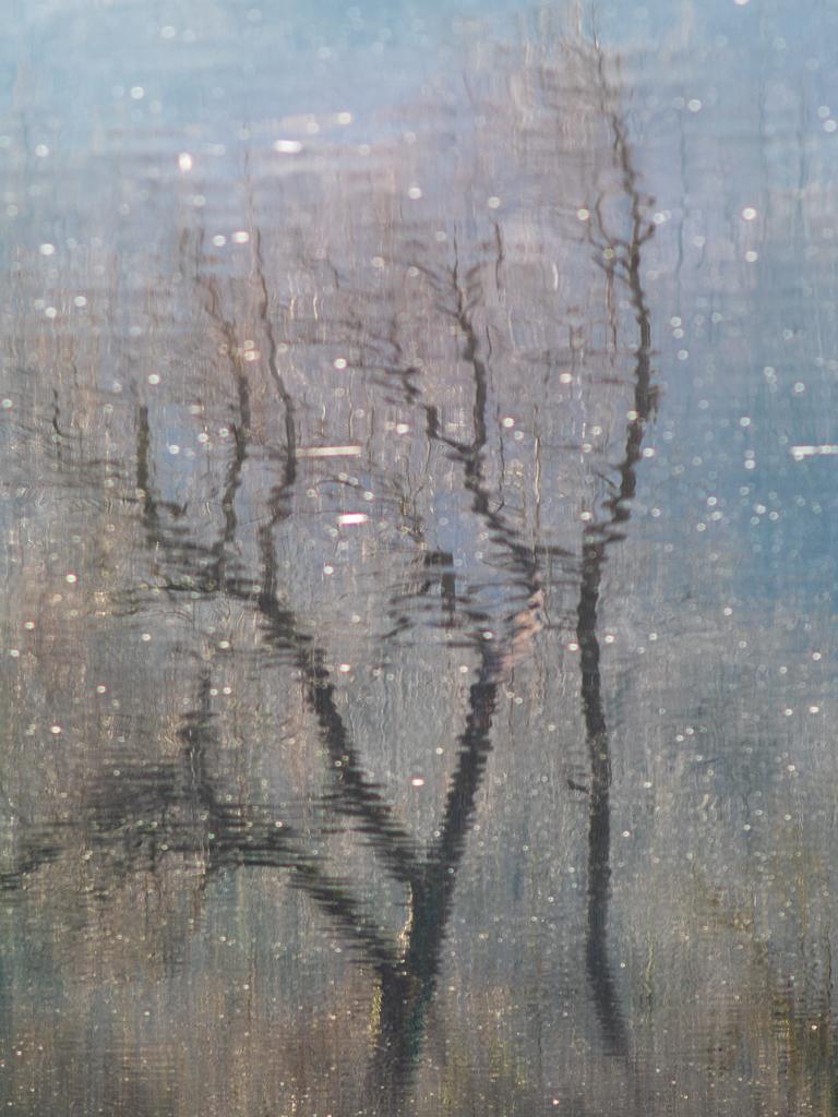 Diario del Lago Piccolo di Avigliana